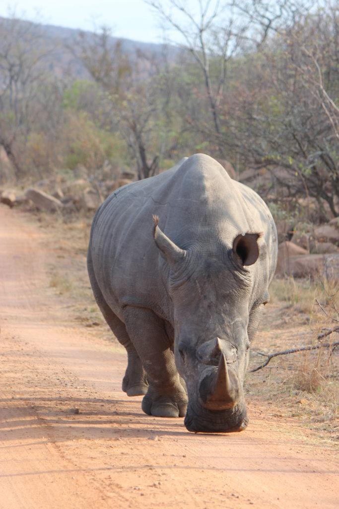 rhino photo: Ann Gadd