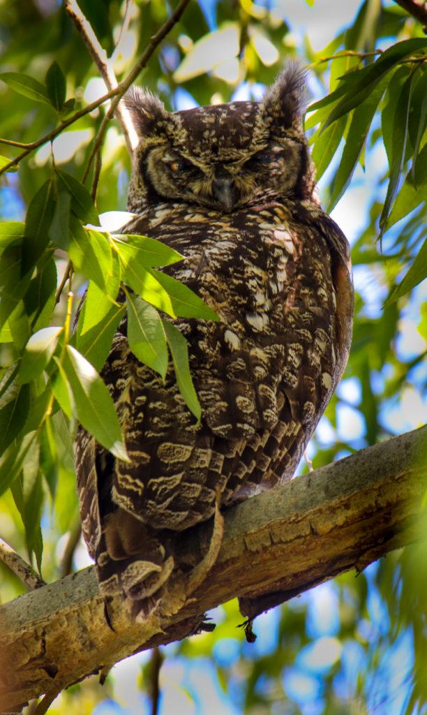 Enneagram Type's Animal Archetypes owl photo by ann gadd