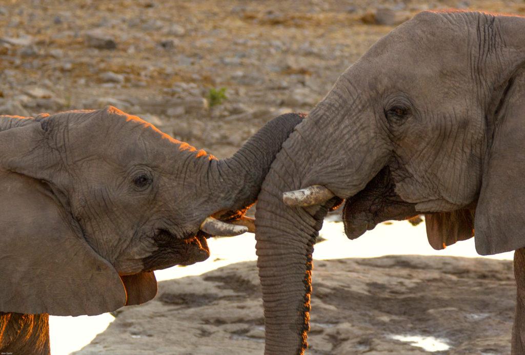 photo of elephants: Ann Gadd